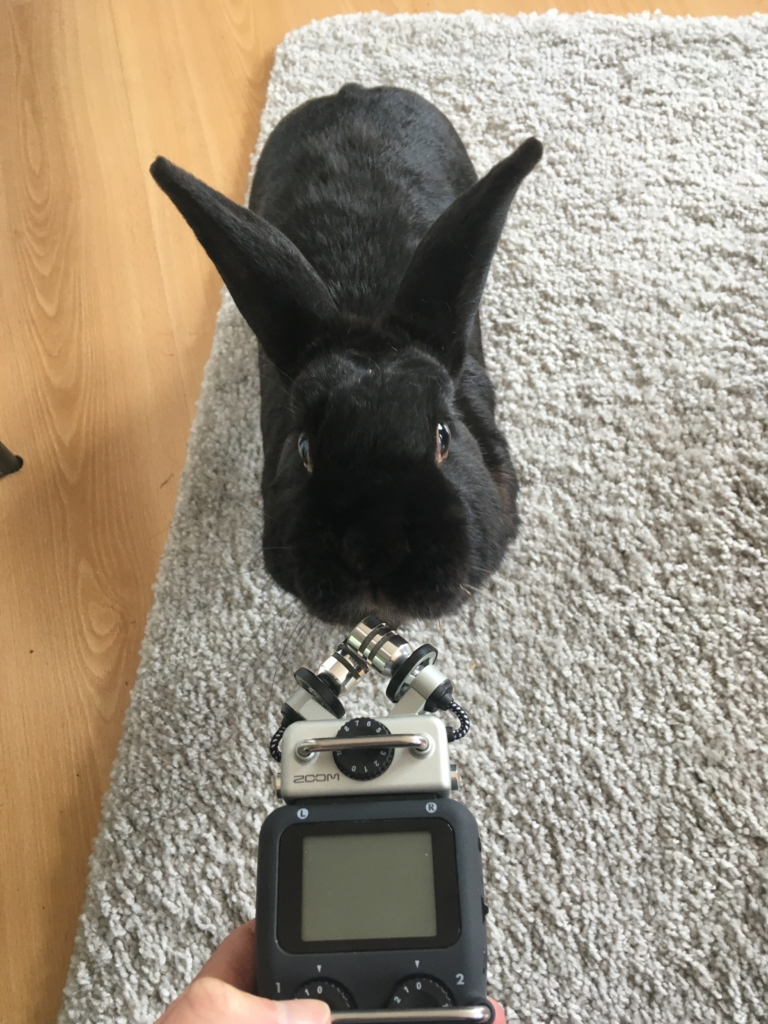 You can even interview rabbits with a good digital recorder